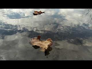 """Осенняя поездка на природу. Осень в СНТ """"Ромашка"""""""