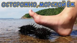 ВНИМАНИЕ ОСТОРОЖНО !!! Черный Морской Ёж - Берегите ваши ноги!