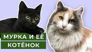 Мурка и её котёнок звёзды Ютуба ! Забавный кот, очень милый котик на канале Фрося, Глаша и Дуняша!