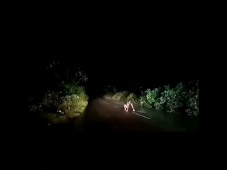 Unidentified creature blocking a vehicle in middle of the road : paranormal activity (must watch 😯😯)
