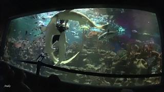 Шоу танец с акулами. Океанариум Санкт-Петербурга.