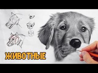 Как научиться рисовать ЛЮБЫХ животных! Базовые принципы.