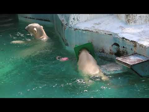 2 2 Aug 2021 Shilka and Hochan at Tennoji zoo Osaka Japan