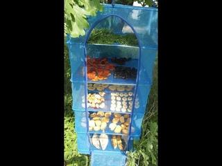 Складная сетка сушилка для овощей и рыбы подвесная 50:50:95 5 полок