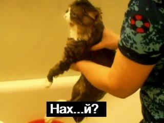 Кот матюкается