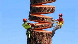 Dangerous Technology Fastest Tree Top Felling Cutting Down Modern Turbo ChainSaw Skills Epic Fail