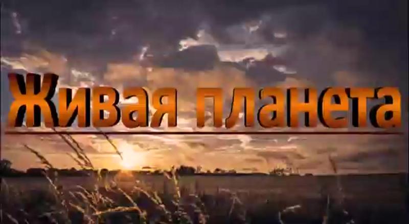 Видео от Библиотечно-информационный центр №1