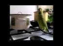 Попугай хочет кушать