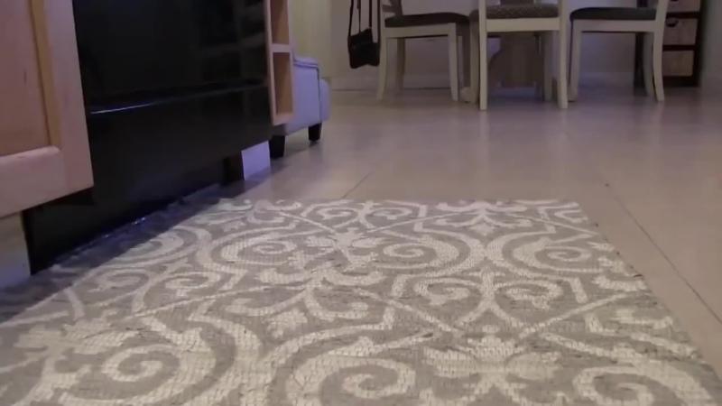 Тренировка щенка французского бульдога