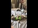 Видео от Группа помощи бездомным животным КотКурорт