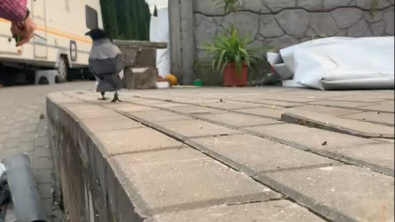 Видео от Имаго│Кормовые насекомые