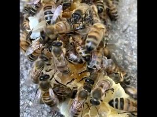 Video by Агентство пчеловодства