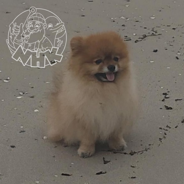 #отподписчикаПропала собака, кличка Лунтик, есть ...
