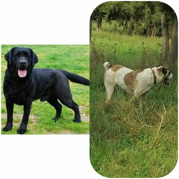 Пропали две собаки в районе промзоны между ст.Каза...