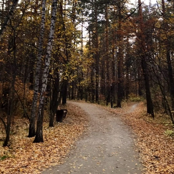В выходные в Пермском крае потеплеет до +10°.Синоп...