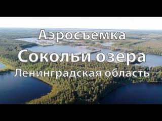 Сокольи озера, Ленинградская область, аэросъемка.