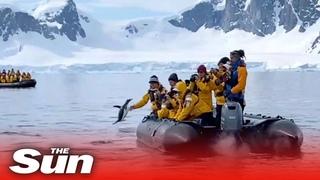 В Антарктиде пингвин спасся от косаток, запрыгнув в лодку к туристам